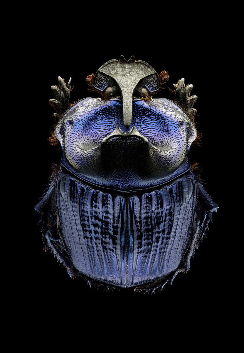 Microsculpture – by Levon Biss - CRXSS