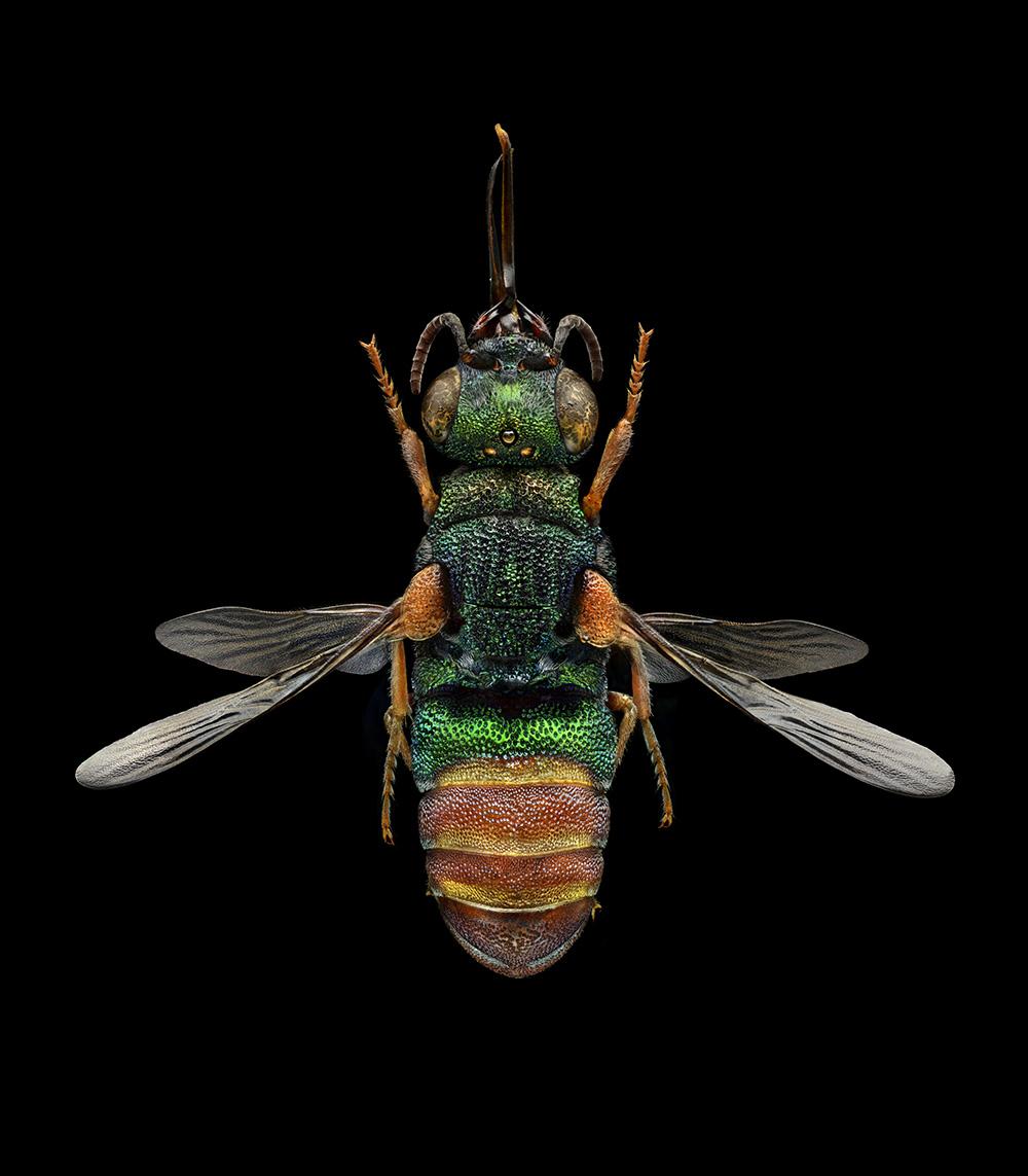 Microsculpture – Levon Biss - CRXSS