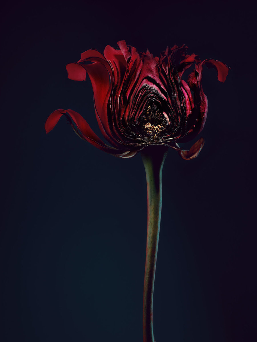 Assaulted Flowers by Simon Puschmann - CRXSS