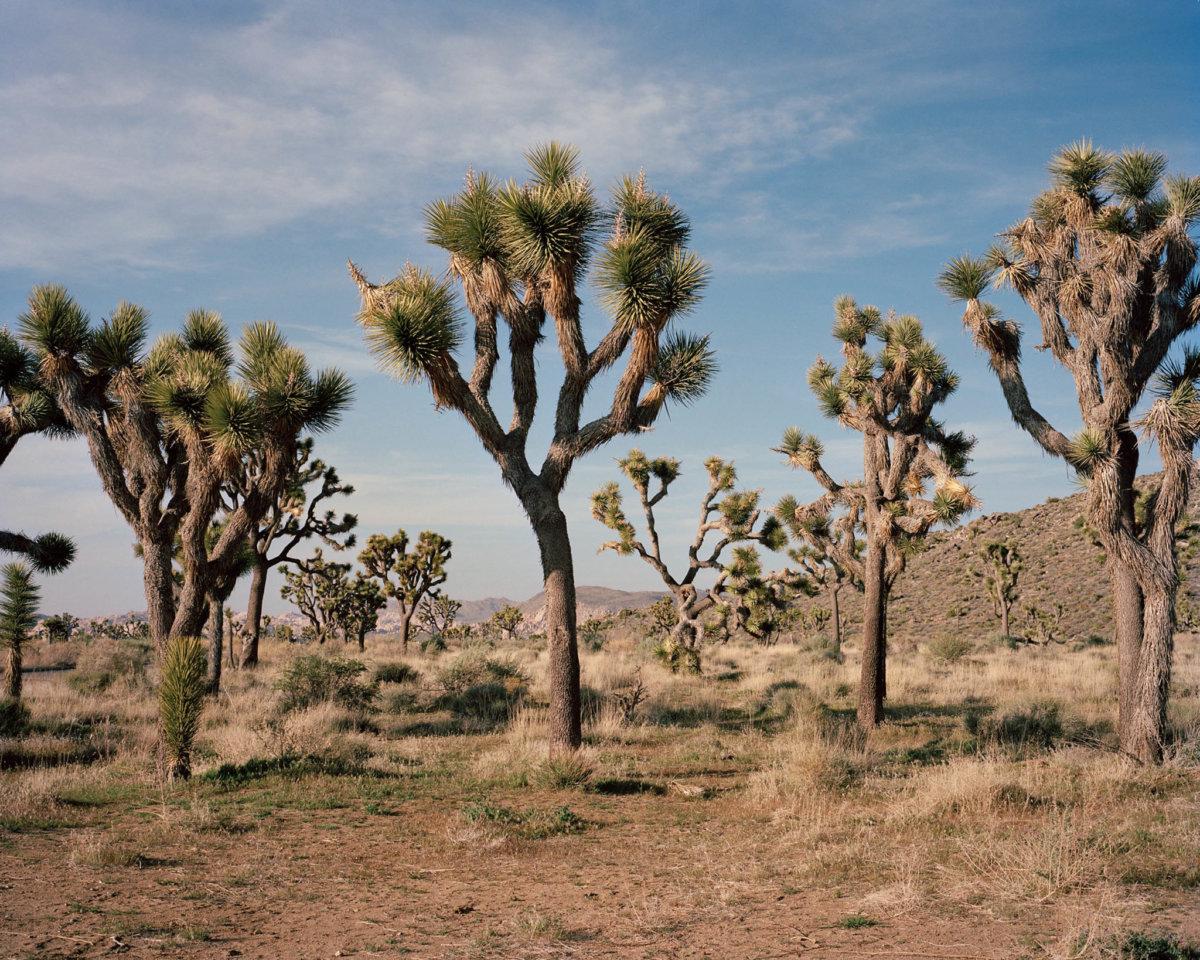 California – Tina Hillier - CRXSS