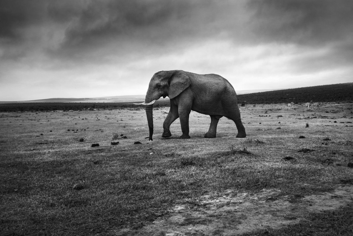 Gorah Elephant Park – Simon Puschmann - CRXSS