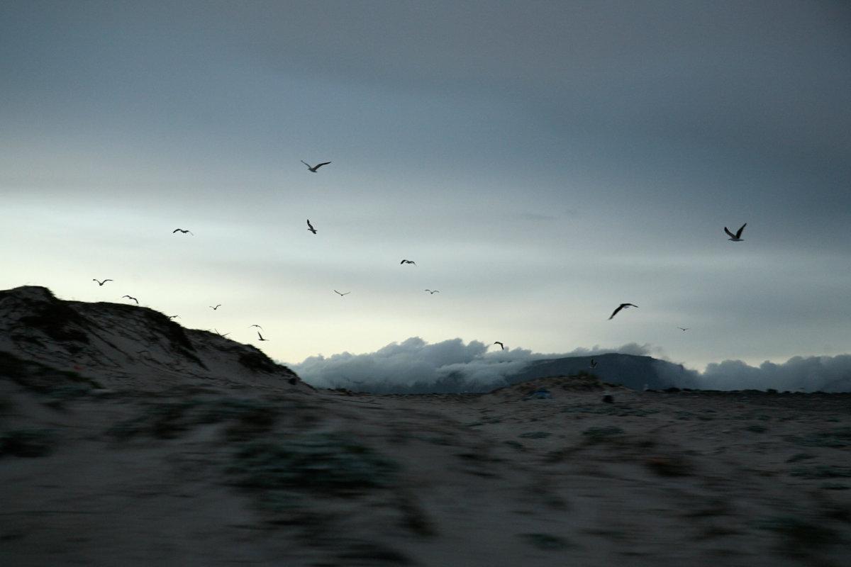 Dune Birds - CRXSS