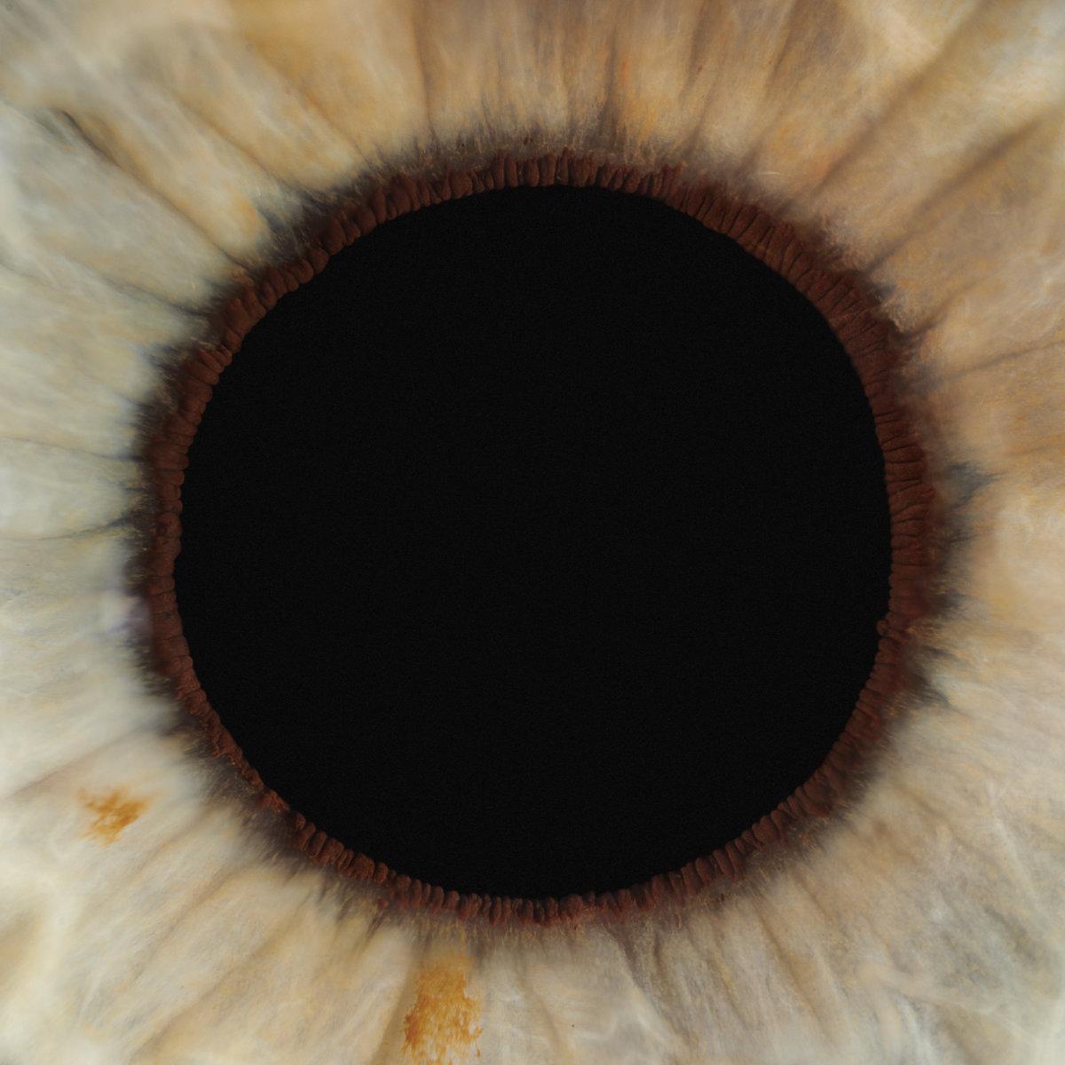 Pupils by Levon Biss. - CRXSS